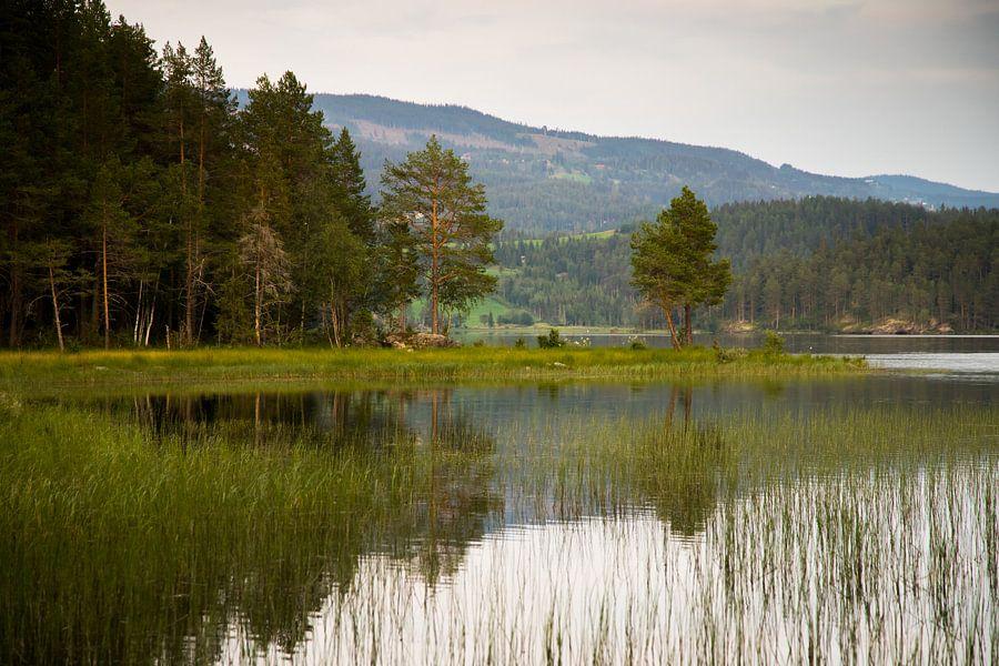 Bos en  aan de rand van het meer
