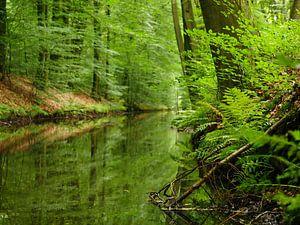 Groene spiegeling van Leonie de Wilde