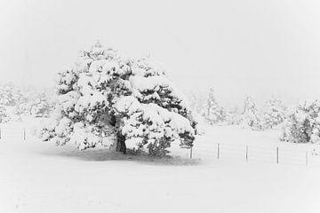 eenzame boom van Angelique Faber