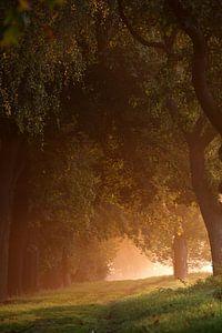 Bäume bei Sonnenaufgang van