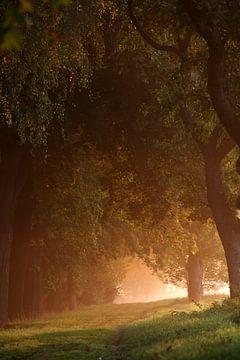 Bäume bei Sonnenaufgang von Jana Behr