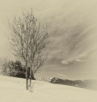 Einsame von Mariette Alders