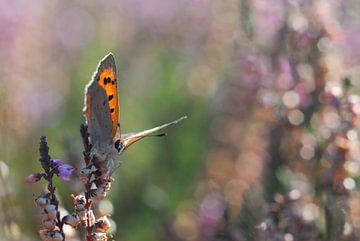 purple and orange von rik janse