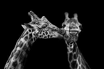 Romantische giraffes in zwartwit van Chihong