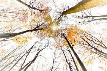 Baum Treffen von Sonja Pixels