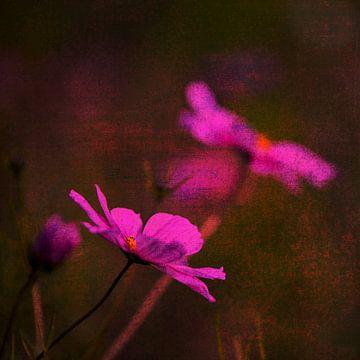 fleurs roses dans le domaine sur Anouschka Hendriks