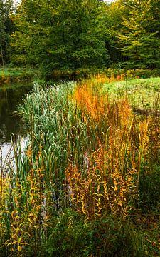 Forêt en automne sur Dirk van Egmond
