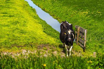 Koe in puur hollands weiland van Sjoerd Tullenaar
