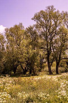 Lage Bergse Bos - Landschaft Nr. 6 von Deborah de Meijer