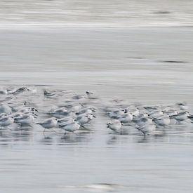 Courez pour votre vie ; coureurs de pierre sur la plage sur Bep van Pelt- Verkuil