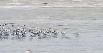 Rennende vogeltjes op het strand van Bep van Pelt- Verkuil