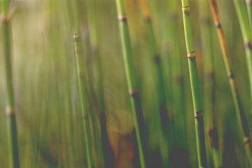 Bambus von Marianne Twijnstra-Gerrits