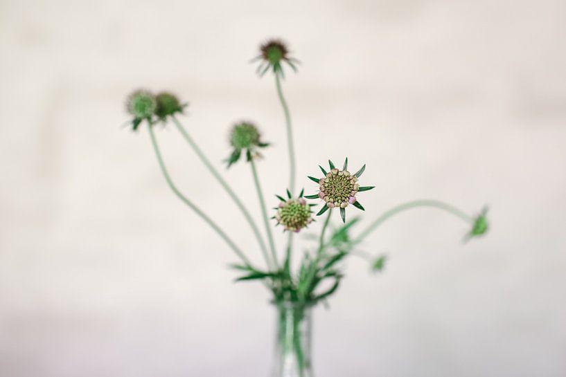 Fleurs sur Carla Van Iersel