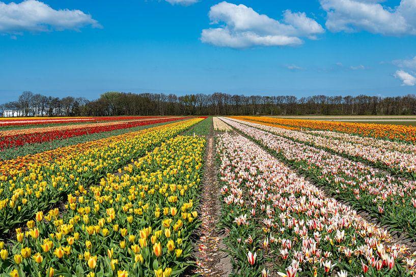 Tulipfield von Aspectus   Design en Realisatie