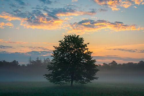 Eenzame boom bij een kleurige zonsopkomst tijdens het gouden uur (Utrechtse Heuvelrug, Nederland)