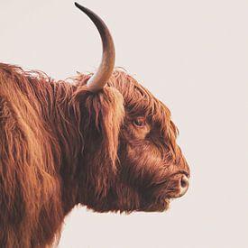 Schotse hooglander stier sur Sander van Driel