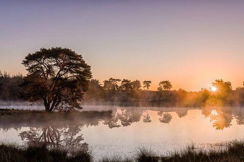 De Zevenboom bij zonsopkomst