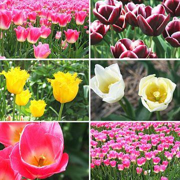 Frühlingsgefühle von Inge Hogenbijl