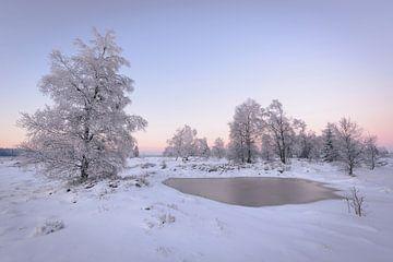 Ven met berken in sneeuw van Michel Lucas