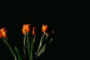 Tulpen van Desiree van den Burg