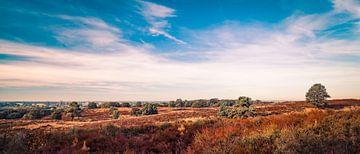 Panorama auf der Mookerheide von Bas Stijntjes