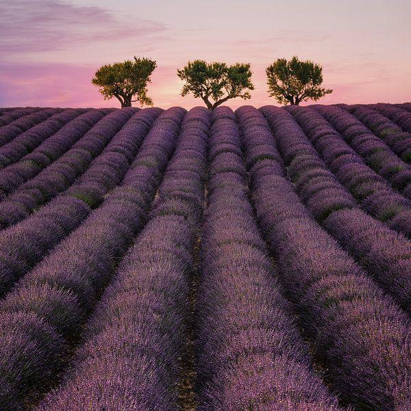 Veld van lavendel van Stefan Schäfer
