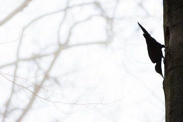Schwarzer Geist des Waldes von Danny Slijfer Natuurfotografie