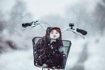 Kat in de sneeuw van Felicity Berkleef