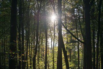 Stralend bos van Robert de Jong