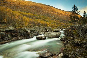 Magalaupet, Nationaal park Dovrefjell-Sunndalsfjella, Noorwegen van Gerhard Niezen Photography