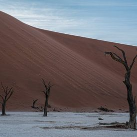 Een dode boom geeft geen schaduw meer van Joris Pannemans - Loris Photography