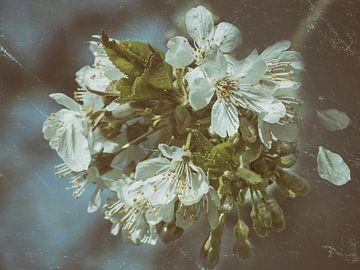 Kersenbloesems - vintage van Christine Nöhmeier