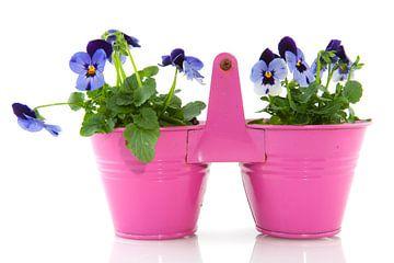 Des violettes bleues dans un pot rose sur Ivonne Wierink