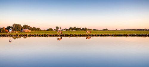 Koeien in het Nederlandse landschap van