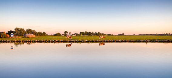 Koeien in het Nederlandse landschap van Erwin Lodder