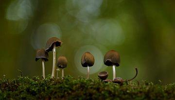 Pilze im Sportlicht von Jack's Eye