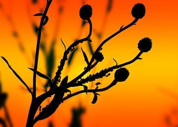 Pflanzen Silhouette von BVpix