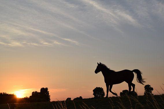 Paard op de dijk tijdens zonsondergang 2 van Anne Hana
