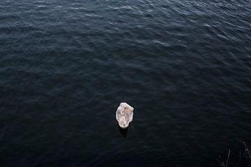 Schwan im Wasser. von JuHru webshop