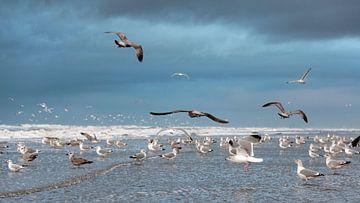 Seagulls von Jeanette van Starkenburg