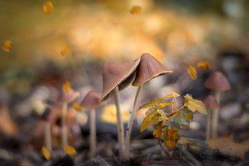 Pilze in warmer Tönung von Kristof Ven