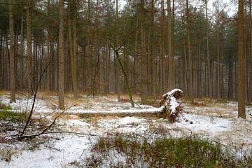 Besneeuwde boom van Johan Vanbockryck