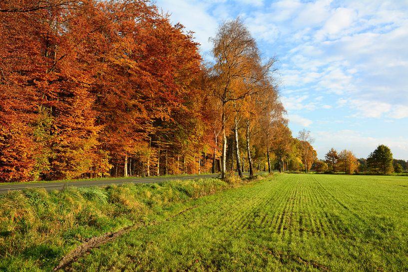 Autumn Colours van Gisela Scheffbuch
