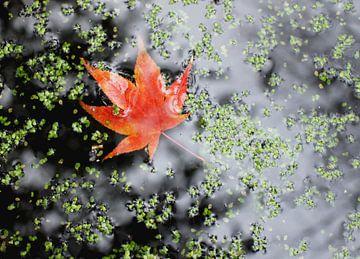 Blaadje in de herfst in het water van Anne van de Beek