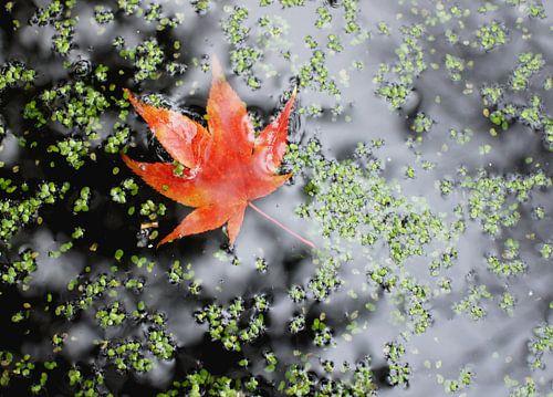 Blaadje in de herfst in het water