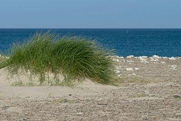 Strandgräser von Kirsten Warner