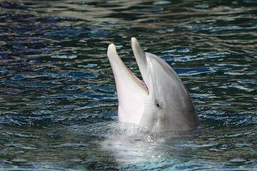 Lachender Delphin sur Heike Hultsch