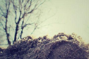 zandlandschap van Nynke Venema | knynk