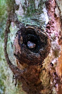 Kikker - Costa Rica. van Vincent Vink