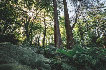 Zonnestralen in het groene bos van Niels Eric Fotografie